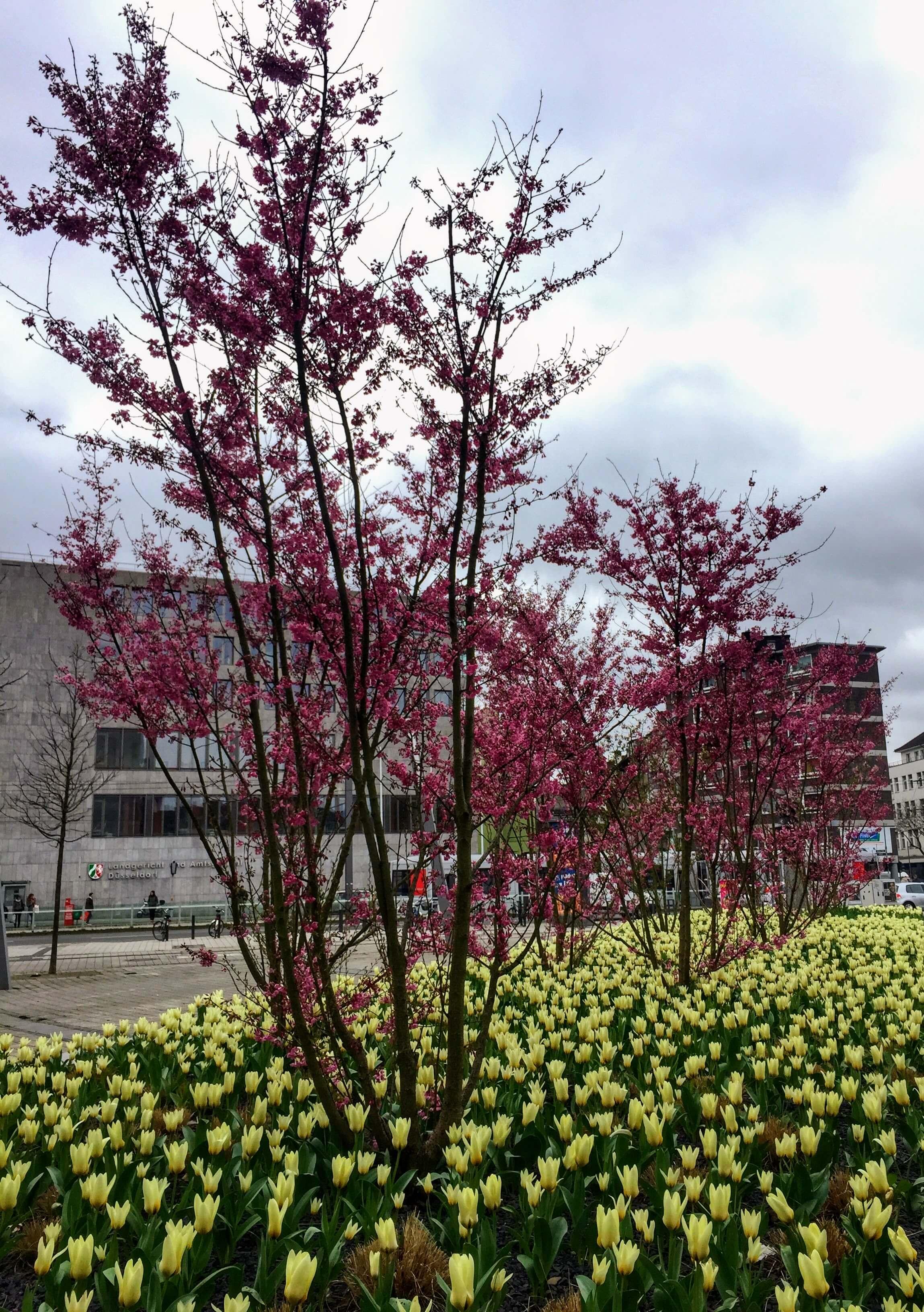inicio de la primavera en alemania